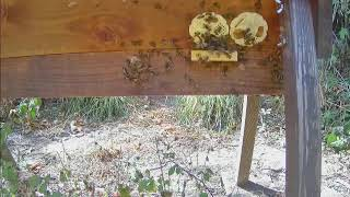 Preview of stream Kingfisher Barn live camera