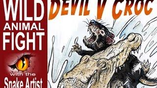 Tasmanian Devil v Crocodile