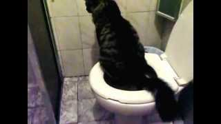 cat pees in toilet for the first time