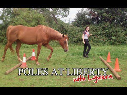 Teach your horse to go over poles at liberty youtube for Negative show pool horse racing