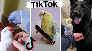 Funny Birds of TIKTOK ~ Cute Pet Birds ~ Peek a Boo