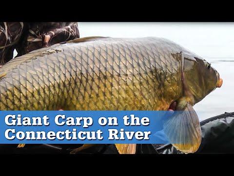 Connecticut River Carp Fishing | S13 E1