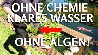 OHNE CHEMIE klares Teichwasser ohne Fadenalgen & Schwebealgen im Koiteich