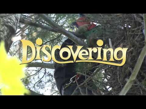 Discovering - Eagle Banding