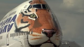 Russian airline gets tiger stripes on its Boeing 747-400