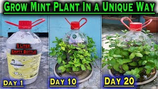How to grow Mint Plant at home in a unique method ll No Space Gardening ll Zero Cost gardening