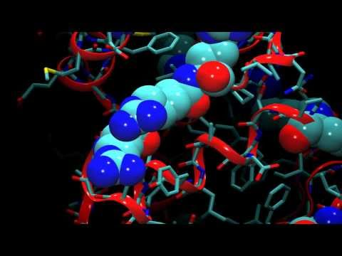 An Introduction to Molecular Dynamics
