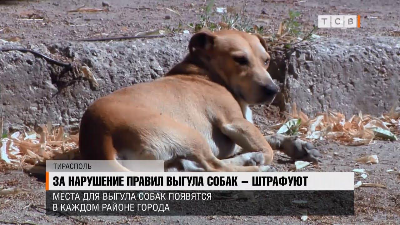 нарушение правил выгула собак коап рф