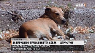 За нарушение правил выгула собак – штрафуют