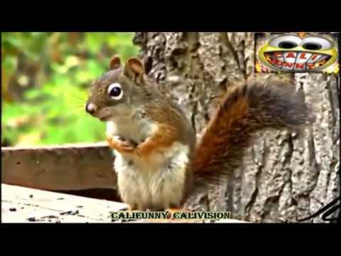 Animal Fails Compilation | CALI FUNNY