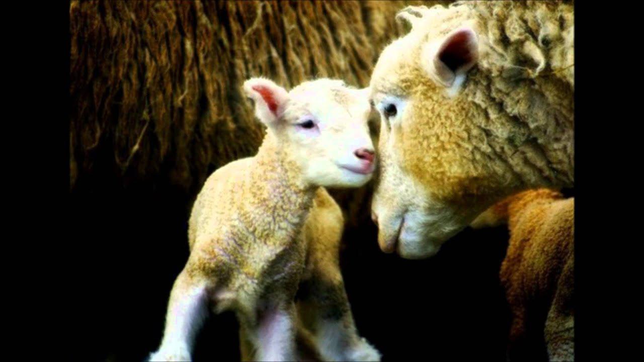 Homenaje A Las Madres Del Reino Animal