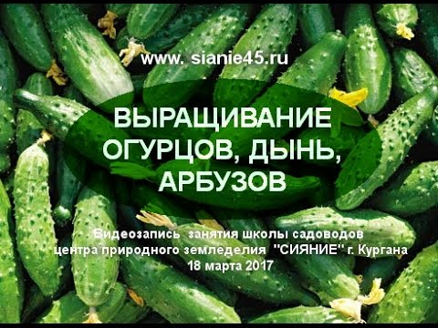 Выращивание огурцов, дынь, арбузов