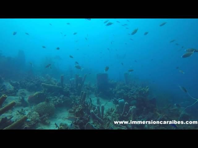 Raies Léopards , Caye des Boucaniers avec Plongée Immersion Caraïbes