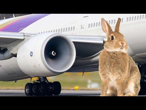 Kelinci terhisap ke mesin pesawat; Pria pura-pura jadi pilot supaya dapat fasilitas  - TomoNews
