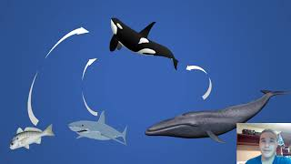 30 Second science video   Killer Whales