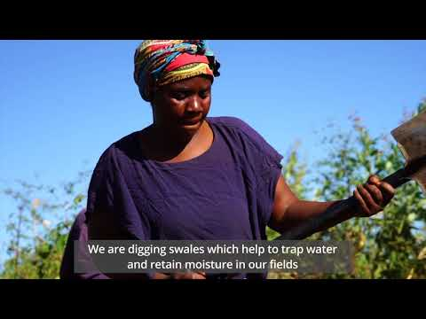In Malawi, weather insurance boosts farmers resilience