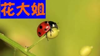 중국교과서 3-2학기: 4. 昆虫备忘录-花大姐 원문읽기