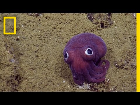 Adorable Googly Eyed Sea Creature Puzzles Scientists National Geographic Youtube