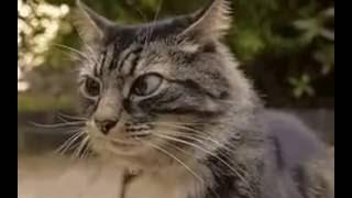 кошка чувствует засаду