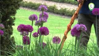 Kleurenpracht in de lente op landgoed IJsselvliedt