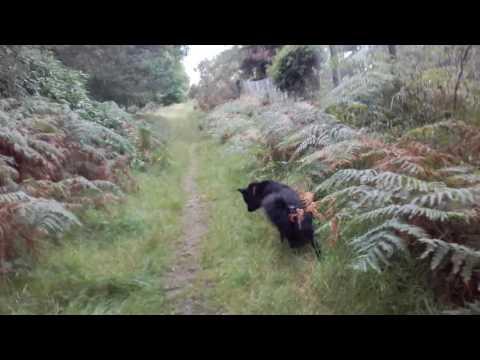 Walking my dog