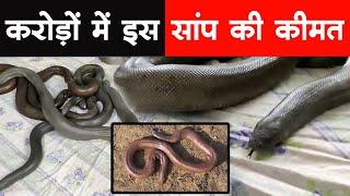 क्यों करोड़ों में बिकता है दोमुंहा सांप, जानने के लिए देखिए ये वीडियो | Myth of Red Sand Boa Snake