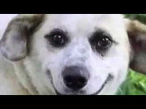 hqdefault cute smiling dogs youtube,Smiling Dog Meme