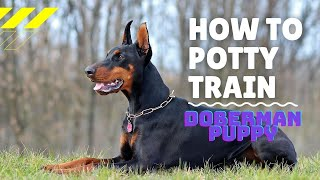 **how To Potty-train A Doberman Puppy**bow**wow**click Here !