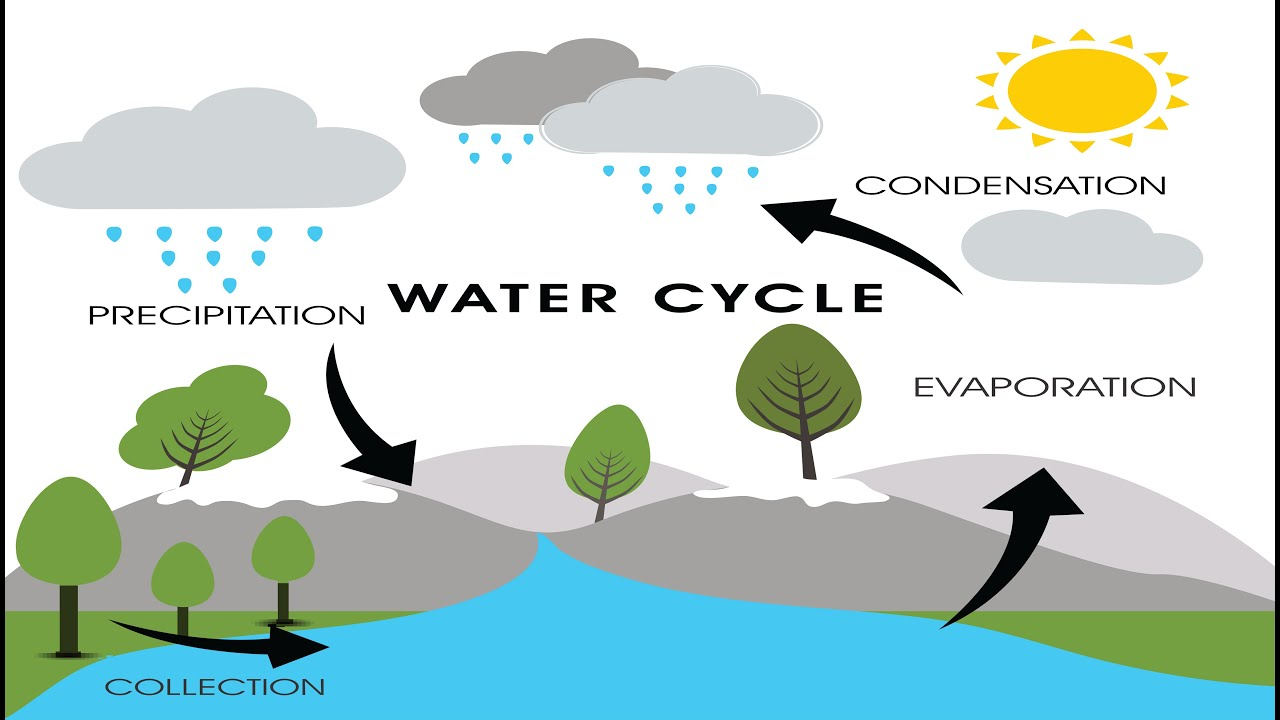 Picture Of Water Cycle Diagram Ez Go Gas Wiring Brain And Body Builders Jack Hartmann