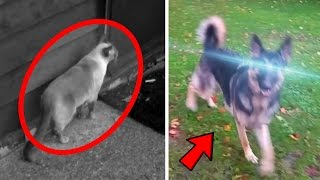 5 Animals With Superpowers Caught on Tape