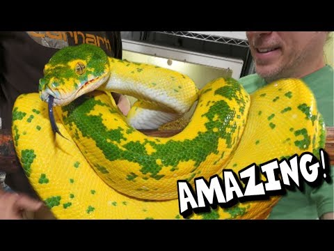 YOU HAVE TO SEE THESE SNAKES!!! AMAZING!!! Brian Barczyk