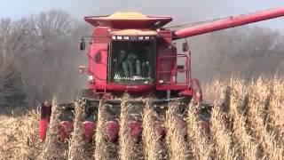cosechadora case trabajando
