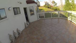 Golden Gate Enterprises Sf Bay Area Waterproof Tile Deck Contractor San Carlos Outside