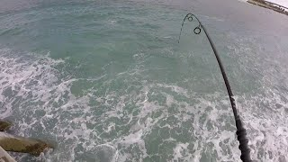 EPIC FISHING BITE - soooooo many Snook