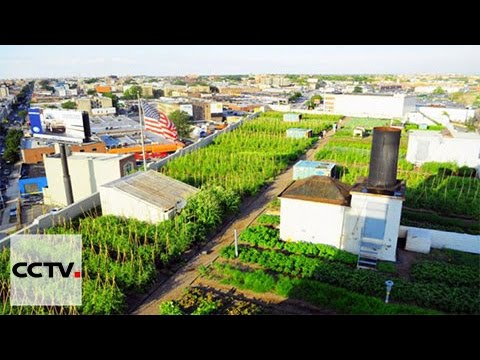 Rooftop farming arrives in Chengdu