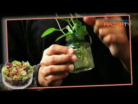 HDB mint garden (FarmVille Singapore Pt 5)