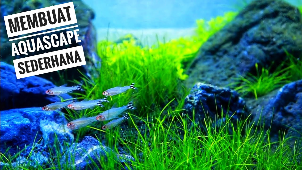#154 Membuat Aquascape tema iwagumi mini sederhana - YouTube
