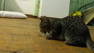 Котенок поймал мышь