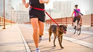 Video Why  Running with Dog is Bad unless cold download MP3, 3GP, MP4, WEBM, AVI, FLV November 2017
