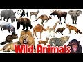 Learn Names of Wild Animals   Picture Dictionary for Kids   English for Children