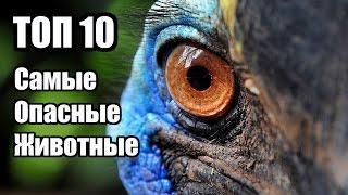 ТОП 10 Самые Опасные Животные | ИНТЕРЕСНЫЕ ФАКТЫ