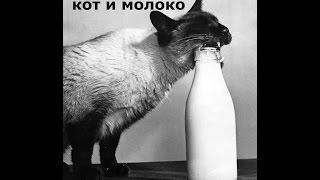 Кошки и молоко)