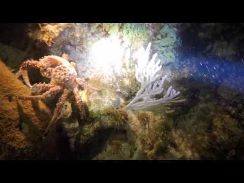 Great Exuma Dive Highlights2