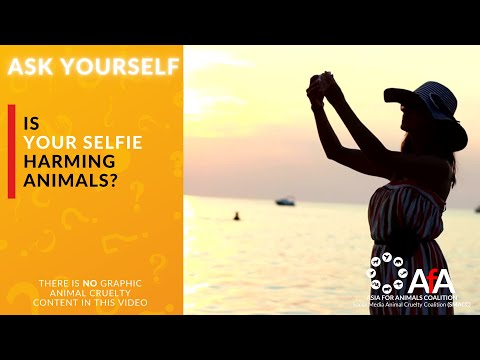 ASK YOURSELF - is your selfie harming animals?