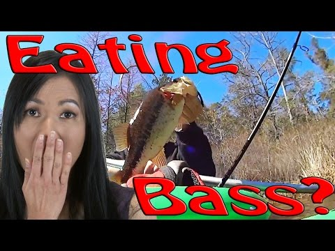 Eating Bass Explained!....Broke Science