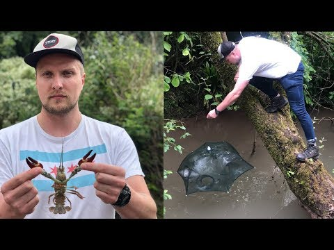 Catch And Cook: Crayfish In The UK