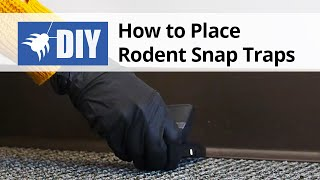 How to Place Rodent Snap Traps