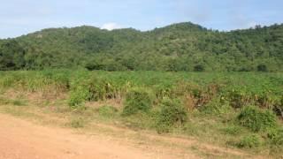 Landscape of potato farm, mountain, rural road, forest, ទេសភាពចំការដំឡូង ភ្នំ ផ្លូវលំ