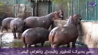 حديقة حيوان الجيزة أعرق حدائق إفريقيا.. فيديو