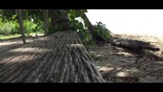 Cinematic iphone video